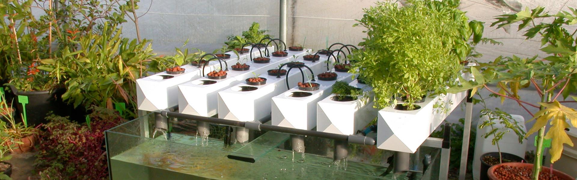 Les composants d'un système aquaponique