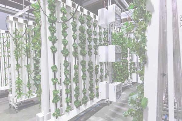 La culture verticale en aquaponie