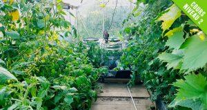 cultiver-serre-aquaponie