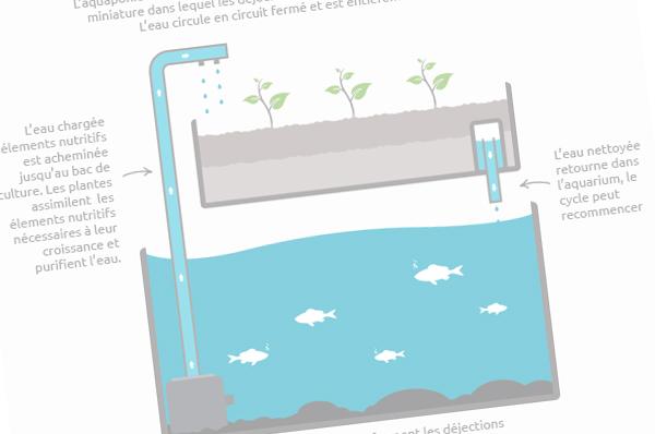 Apprendre les bases de l'aquaponie