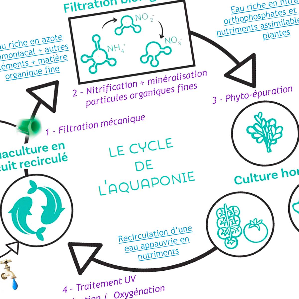 Introduction à l'aquaponie